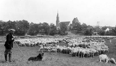 Sheep Herder with Flock, Upper Alsace, France
